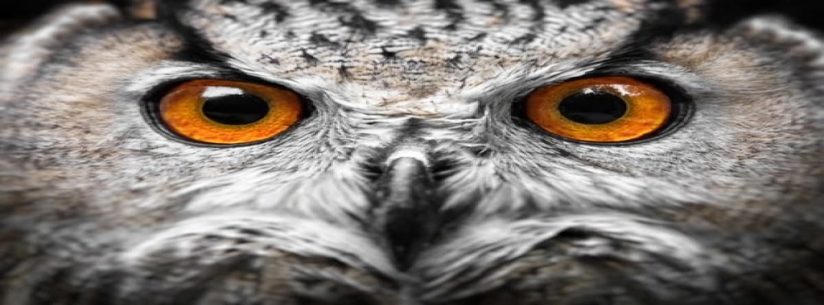 Fighting Fake News: Google's Project Owl